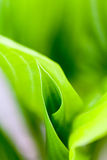 Green, abstract composition with leaf texture Stock Photos