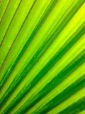 Green abstract Royalty Free Stock Photography
