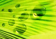 Green abstract nature Stock Images