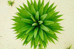 Free Green Abstract Nature Background Royalty Free Stock Photos - 52994718