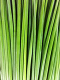Green. Abstract from stem of garlic chives for background Stock Image