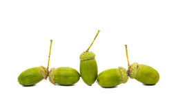 Green acorn Royalty Free Stock Images