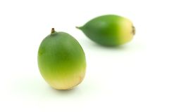 Green Acorns. Isolated on white Stock Images