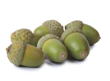 Green acorns Stock Photo