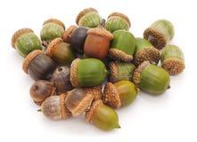 Green acorns. Stock Photography