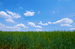 Green acre. With blue sky and clouds Royalty Free Stock Images