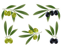Green ad black olives with leaves. Stock Images