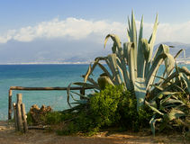 Green agave near sea coast Stock Image