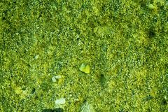 Green Aged cement wall texture, rock background, cracked surface. For web site or mobile devices Royalty Free Stock Images