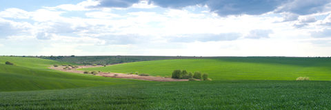 Green agricultural field Royalty Free Stock Photos