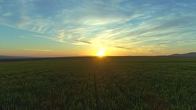 Green agricultural field and blue sunset sky stock footage
