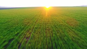 Green agricultural field and blue sunset sky stock video footage