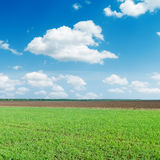 Green agricultural field under blue sky Royalty Free Stock Images