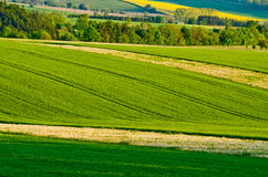 Green agricultural scenery Royalty Free Stock Photo