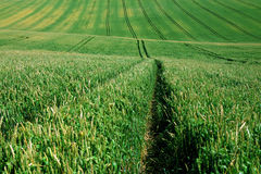 Green agriculture field with the tractor way path Royalty Free Stock Photos