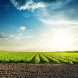 Agriculture fields and sunset in blue sky with clouds. Green agriculture fields and sunset in blue sky with clouds Stock Image