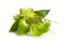 Green Alepes kalla bouquet Stock Photo