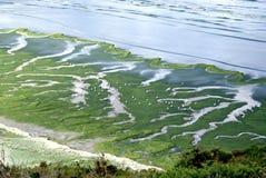 Green Alga. Landscape from Brittany; green alga against the shore Royalty Free Stock Photography