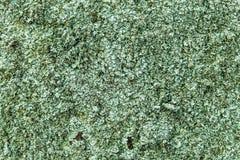 Green algae alga background texture pattern Royalty Free Stock Image