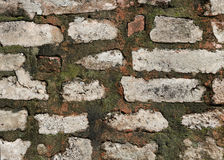 Green Algae on brick Wall closeup. Close up of a old brick Wall with moss algae Lichen texture background Stock Images