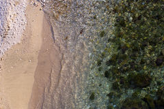 Green algae covering sea bottom Royalty Free Stock Photography
