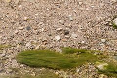 Green Algae in The Water Royalty Free Stock Photography