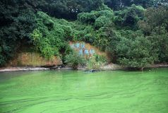 Green algae pollution. Green algae is blooming in a lake. This photo is taken in lake Tai, China. The ironic thing is the carved characters mean:The landscape Stock Photos