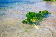 Green algae on a rock in the middle of the sea. Stone, rocks, algae and sea, shore and stones. Beautiful landscapes, seaside, natu Royalty Free Stock Image