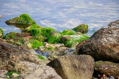 Green algae rock stone in the sea royalty free stock image