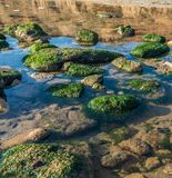 Green algae on the rocks at the edge of the sea. On a sunny autumn day stock image
