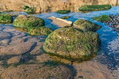 Green algae on the rocks at the edge of the sea. On a sunny autumn day royalty free stock images