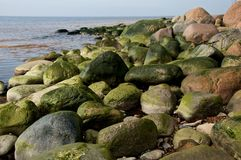 Green algae on rocks by sea. Green algae on scattered rocks on beach with sea in background Stock Photography