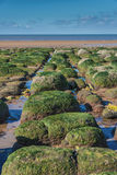Green algae on rocks by sea at low tide Stock Photo