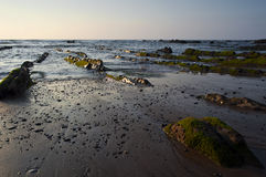 Green algae in the rocks, at sunset in Barrika. Beach, Spain Royalty Free Stock Photos