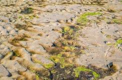 Green algae on sand beach Stock Photography