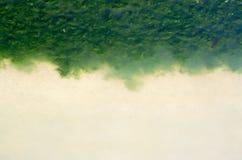 Green algae on the sea beach. Pollution of the environment stock photos