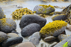 Green algae or seaweed Royalty Free Stock Image