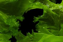 Green algae or seaweed can produce biofuel industry