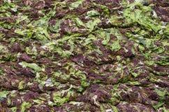 Green algae and seaweed Royalty Free Stock Photo