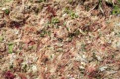 Green algae and seaweed Royalty Free Stock Photos
