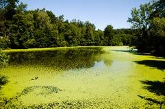 Green Algae See Stockfotografie