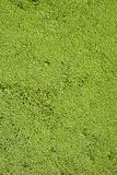Green algae. The solid background. For the screensaver Royalty Free Stock Photo