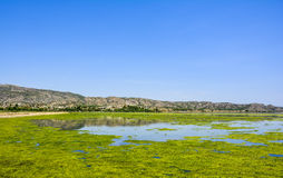 Green algae on the surface of Uchali Lake. Green algae on a surface of Uchali Lake in Soon Valley, Khushab. Uchali Lake is the most popular tourist attraction in Stock Images