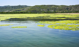 Green algae on the surface of Uchali Lake. Green algae on a surface of Uchali Lake in Soon Valley, Khushab. Uchali Lake is the most popular tourist attraction in stock image