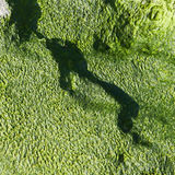 Green algae texture Stock Photos