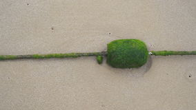 Green algae on thin rope on sand floor in Thailand stock video footage