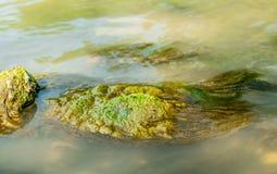 Green algae under blue water drawn by stream Stock Photography