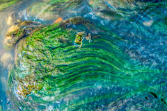 Green algae under blue water drawn by stream Royalty Free Stock Photos