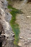 Green Algae in The Water By a Rock Stock Photo