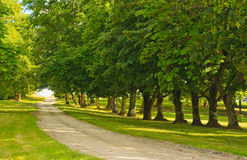 Green alley Royalty Free Stock Image